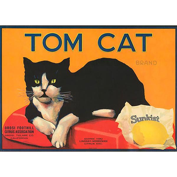 kaart tom cat